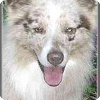 Adopt A Pet :: Bear - Orlando, FL