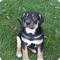 Adopt A Pet :: Stryker - Oak Creek, WI