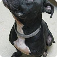 Adopt A Pet :: Boomer - Gary, IN