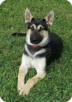 German Shepherd Dog Mix Dog for adoption in Nashville, Tennessee - Clark