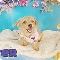 Adopt A Pet :: Sister - Odessa, TX