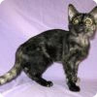 Adopt A Pet :: Phaedra - Powell, OH