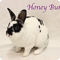 Adopt A Pet :: Honey Bun - Bradenton, FL