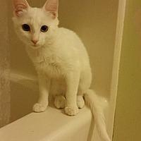 Adopt A Pet :: Snow White - Greensboro, NC