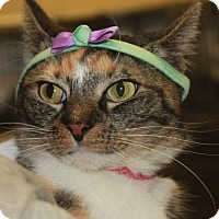 Adopt A Pet :: EVANGELINE - Clayton, NJ