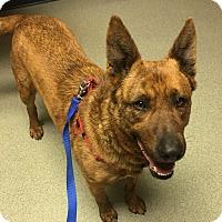 Adopt A Pet :: Duke - Liberal, KS