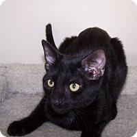 Adopt A Pet :: K-Peanut1-Scooby - Colorado Springs, CO