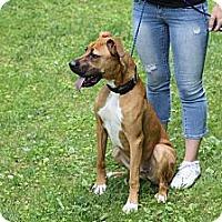 Adopt A Pet :: Rane - Reisterstown, MD