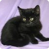 Adopt A Pet :: Nero - Powell, OH