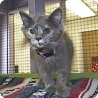 Adopt A Pet :: Mimi - Dover, OH