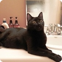 Adopt A Pet :: Viv - Vancouver, BC