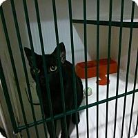 Adopt A Pet :: Cinder - Hamilton, ON
