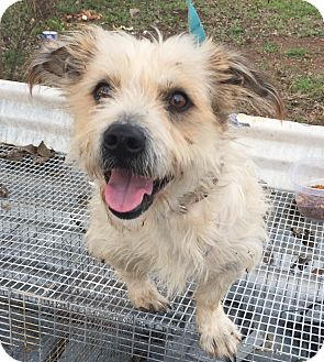 Terrier (Unknown Type, Small) Mix Dog for adoption in Portland, Oregon - Stuart