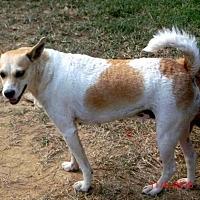 Adopt A Pet :: Jackie-O- Lantern - McKenzie, TN
