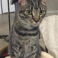 Adopt A Pet :: Rocky - Johnson City, TN