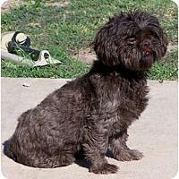 Adopt A Pet :: Tonya - San Angelo, TX