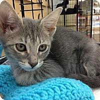 Adopt A Pet :: Petite - Vero Beach, FL