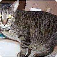 Adopt A Pet :: Squiggles - Goldsboro, NC