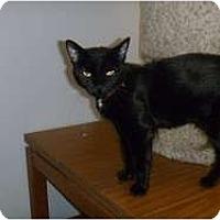 Adopt A Pet :: Hilda - Hamburg, NY