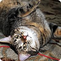 Adopt A Pet :: Amanda - Palmdale, CA