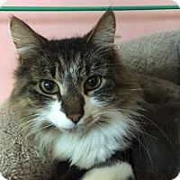 Adopt A Pet :: Bronco - Medina, OH