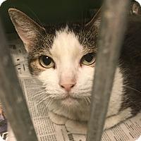 Adopt A Pet :: Pretty Girl - New Egypt, NJ