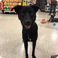 Adopt A Pet :: Timber - Hohenwald, TN