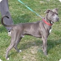 Adopt A Pet :: Stanley, D10 - Mineral, VA
