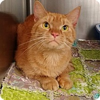 Adopt A Pet :: Garfield - Umatilla, FL