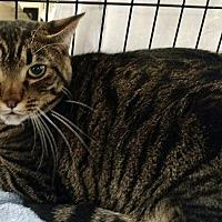 Adopt A Pet :: Eric - Seminole, FL