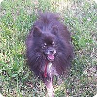 Adopt A Pet :: gibbles - Sacramento, CA
