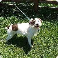 Adopt A Pet :: BORIS - Wisconsin Dells, WI