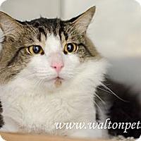 Adopt A Pet :: Jetson - Monroe, GA