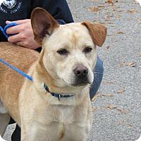 Adopt A Pet :: Barley - Bardonia, NY