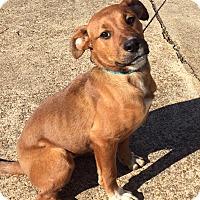 Adopt A Pet :: SUNFLOWER - CHICAGO, IL