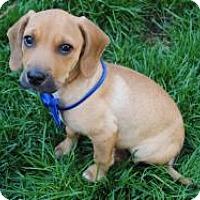 Adopt A Pet :: Vinny - Marlton, NJ