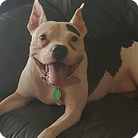Adopt A Pet :: Daisy (FOSTER NEEDED ASAP) - Belleville, MI
