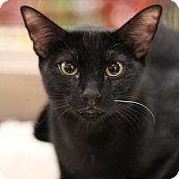 Adopt A Pet :: Sooty - Sacramento, CA
