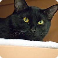 Adopt A Pet :: Gummy Bear - Byron Center, MI
