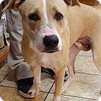 Adopt A Pet :: Luna - Las Vegas, NV