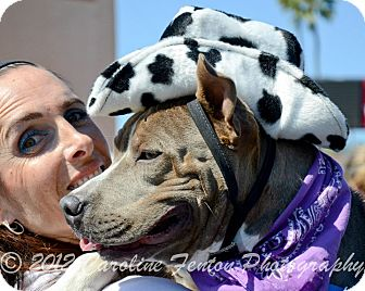 American Pit Bull Terrier Mix Dog for adoption in San Diego, California - Mufasa