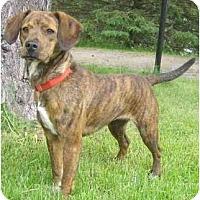 Adopt A Pet :: Lil Mama - Toronto/Etobicoke/GTA, ON