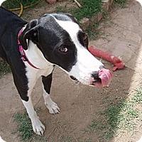 Adopt A Pet :: Zyra - Phoenix, AZ