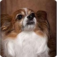 Adopt A Pet :: Rocky - Murfreesboro, TN