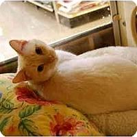 Adopt A Pet :: B.J. - Modesto, CA