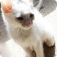 Adopt A Pet :: Bea - Xenia, OH