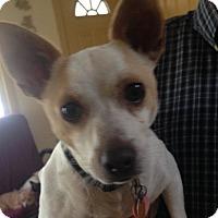 Adopt A Pet :: long timer! Reduced fee! Bubba - Foster, RI