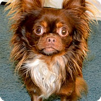 Adopt A Pet :: Clark - Simi Valley, CA