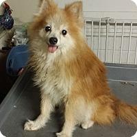 Adopt A Pet :: Phoenix - conroe, TX