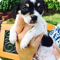 Adopt A Pet :: Buttons - Beavercreek, OH